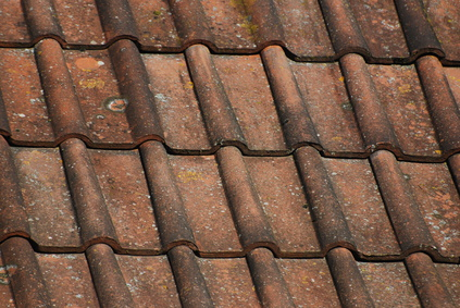 Clay Tile Styles
